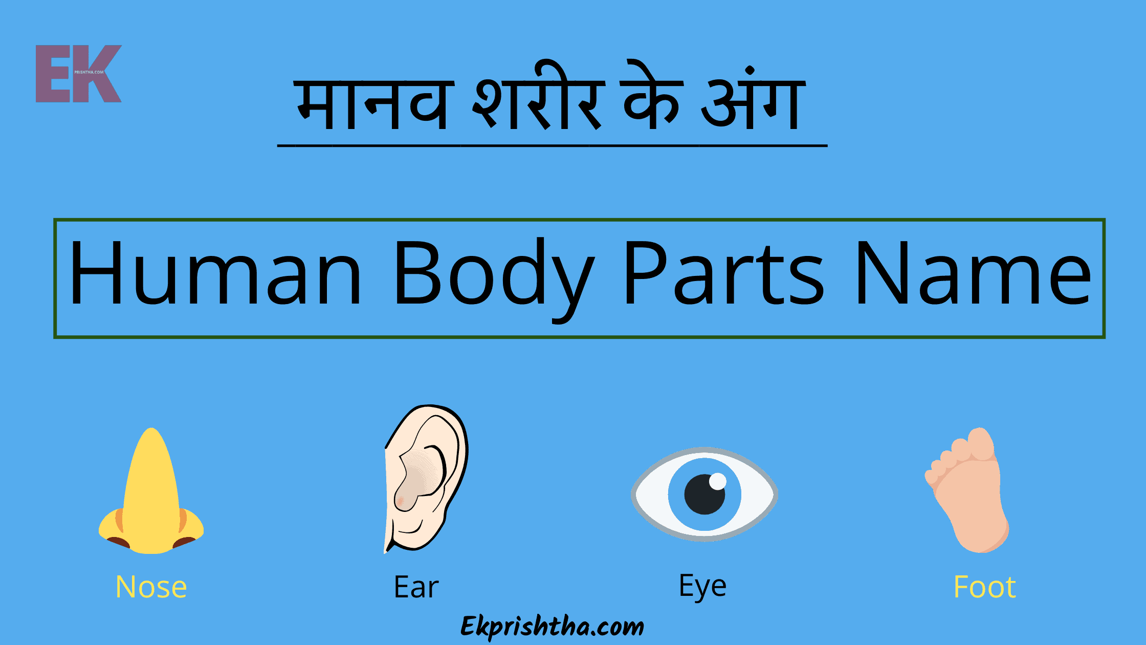 Human Body Parts Name