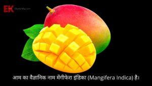 scientific name of mango