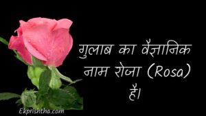 scientific name of rose in hindi